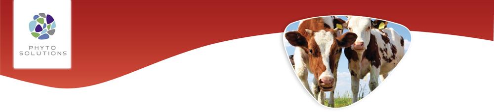Phytmax Beef Cattle_en